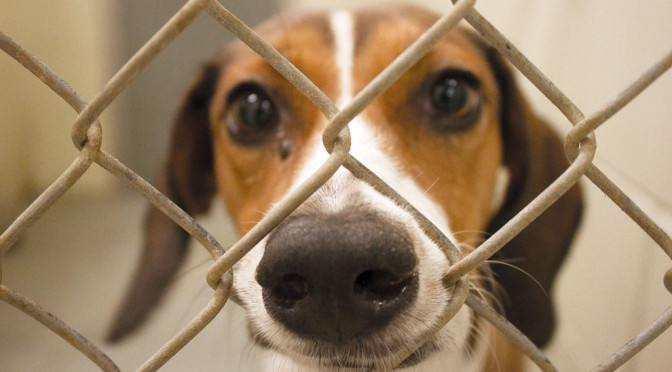 The View From Olympus: An Animal Shelter Foreign Policy